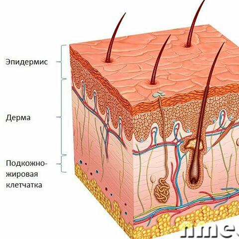 подкожно жировая клетчатка