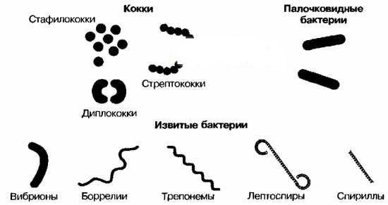 этиология пиодермий