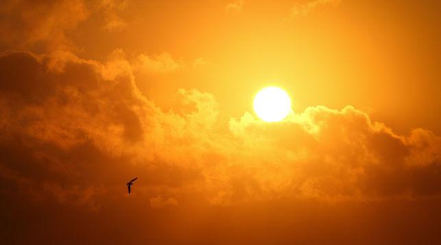причины фотоаллергических реакций